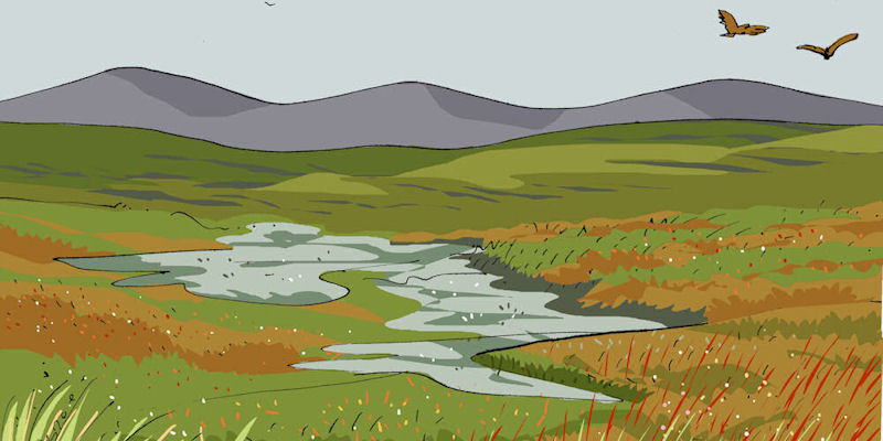 Peatlands graphic