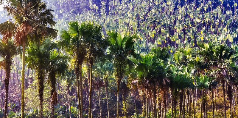 Palm tropical forest research