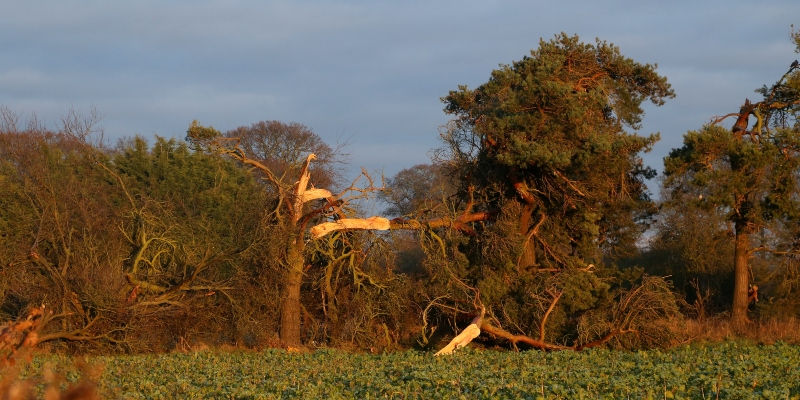 Damage caused by a tornado in Ternhill, Shropshire