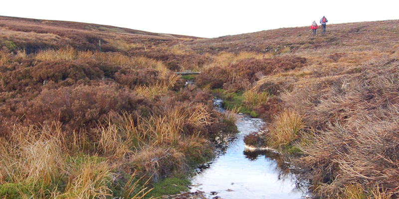 Moors and peatland