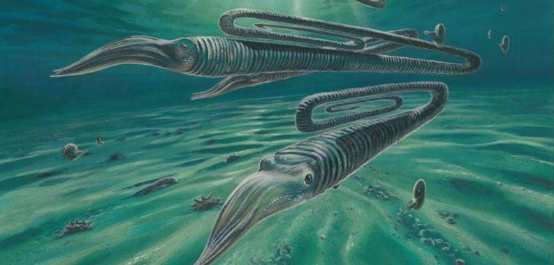 Antarctic fossils reveal creatures weren't safer in the south during dinosaur extinction