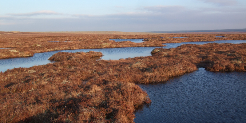 Peatland code could significantly cut greenhouse gas emissions