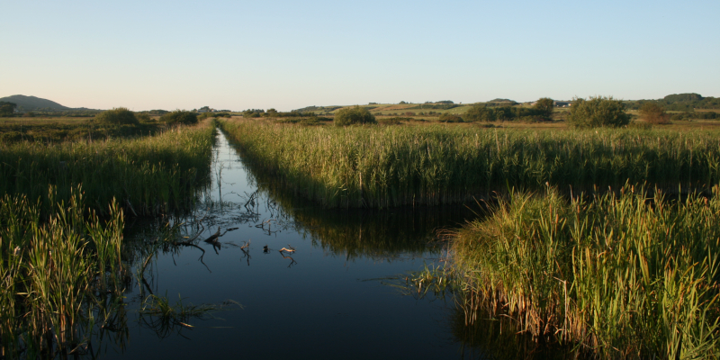 Managing peatlands to cut greenhouse gas emissions