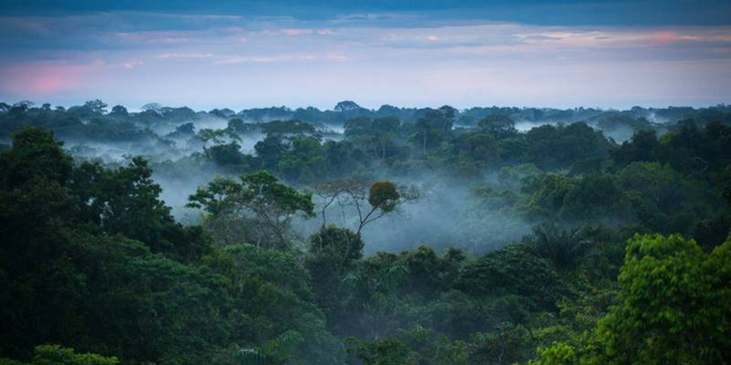 The bright ways forests affect their environment