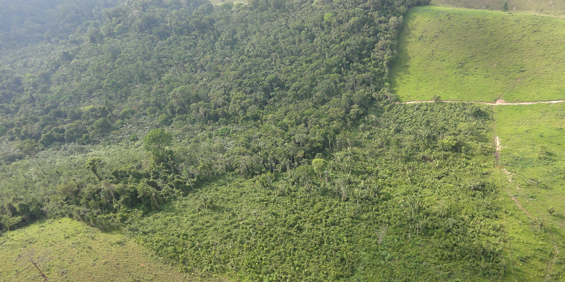 Secondary forests provide deforestation buffer for old-growth primary forests