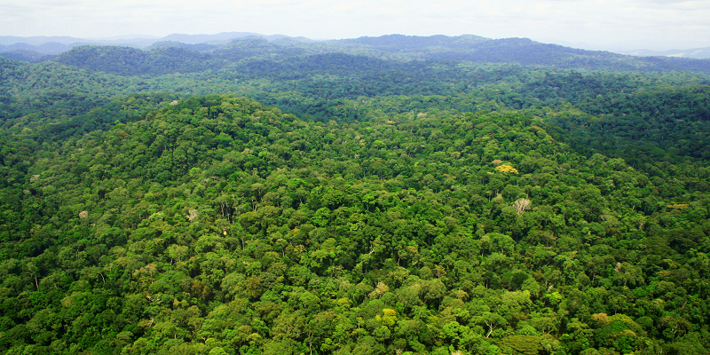 Tropical forests' carbon sink 'already rapidly weakening'