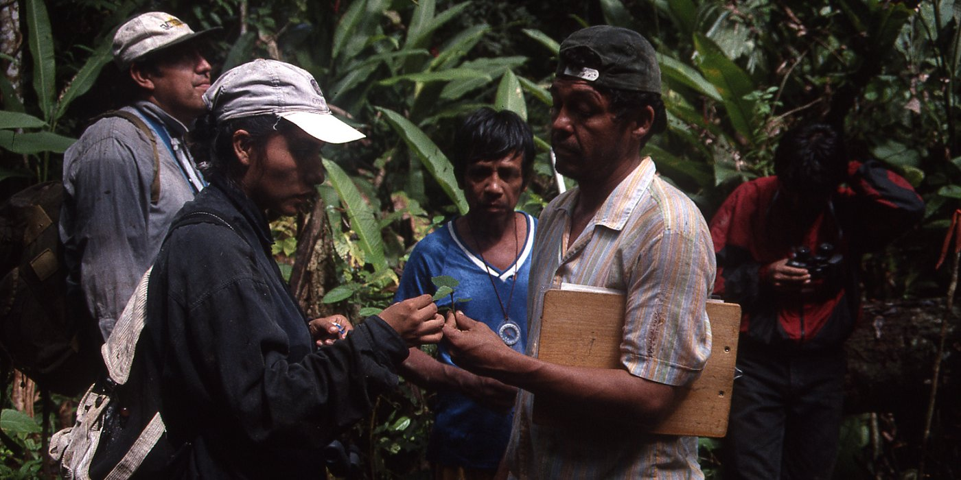 Identifying seedlings, Madre De Dios River, Peru 1998, Oliver Phillips, Unviersity of Leeds