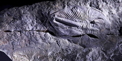 Image of a fossil