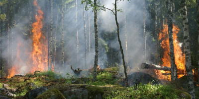 Image of forest wildfire
