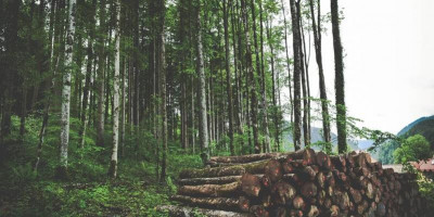 New insight into climate impacts of deforestation. Photo by: Jace Grandin.