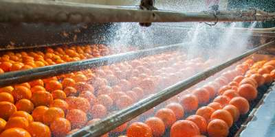 Oranges being washed in the production line