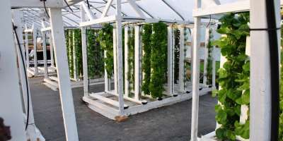 Hydroponic vertical