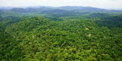 African tropical forest