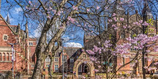 Blossom on campus