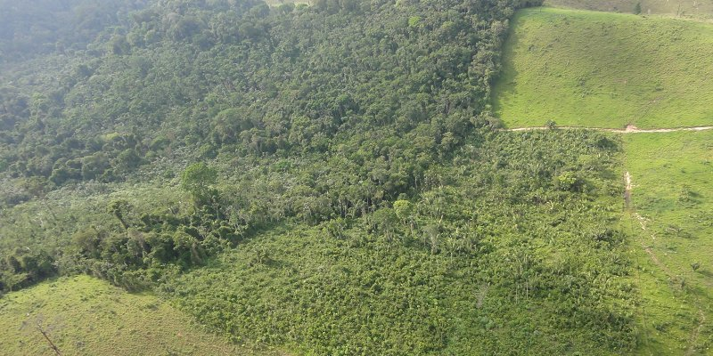 Secondary forest clearings Amazon