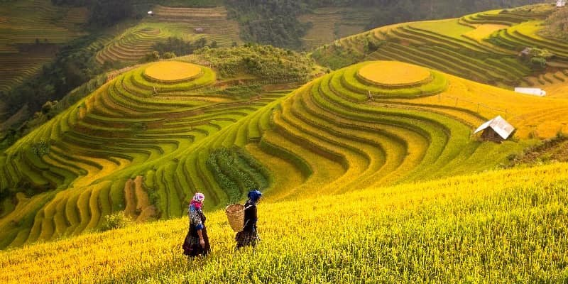 Rice fields covering terraced hillside